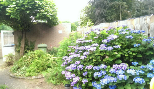 あこがれの庭